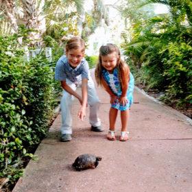 useppa-island-turtle